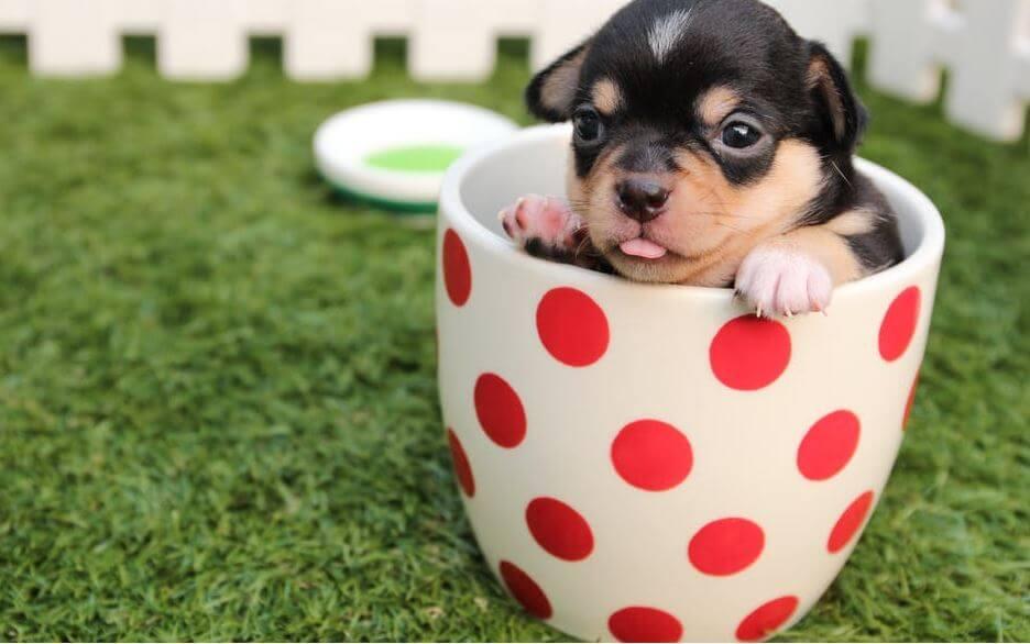 11. whatsapp dp for cute dog image (1)