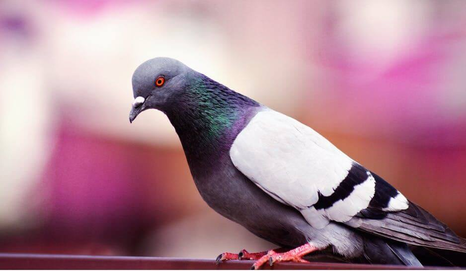 16. love bird image 2019 for whatsapp dpz (1)